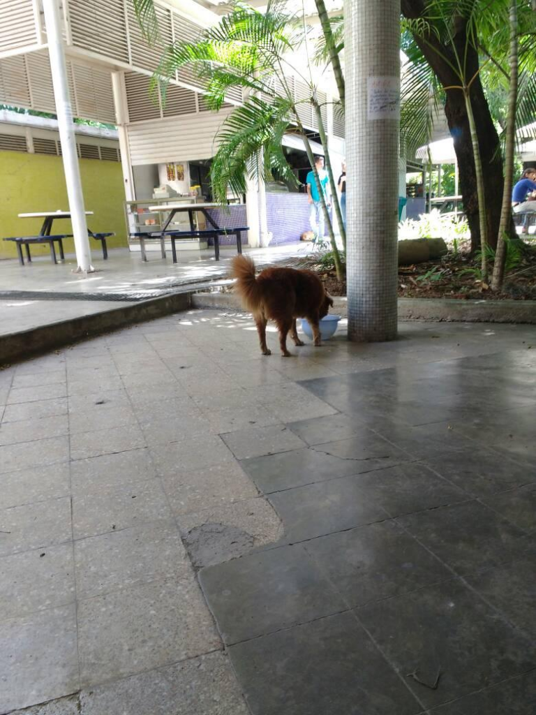 University Dog Eating